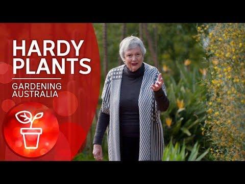 Hardy Plants For An Australian Summer