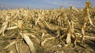 World Food Supply Is Being Slammed By Extreme Weather
