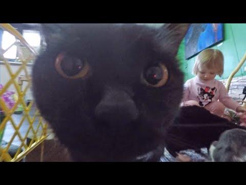Детский блогер Алена, Коты, Кошки и Котята!