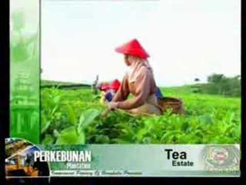 Bengkulu Farming (in English)