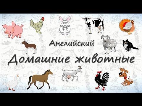 Вопрос: Какое домашнее животное самое распространенное?