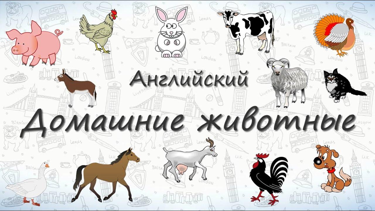 Домашние животные на английском. ВИДЕОТРЕНАЖЕР