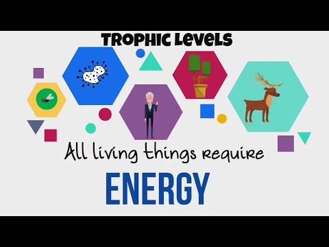 Trophic Levels-Energy Flow in Ecosystems