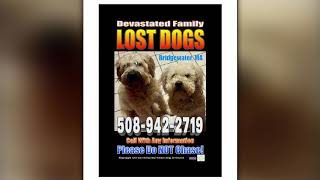 Heartbreaking Search Continues For Two Missing Bridgewater Dogs