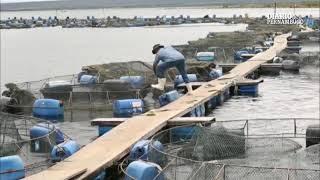 Baixar Reportagem especial do Diario de Pernambuco destaca a criação de peixes em Petrolândia-PE