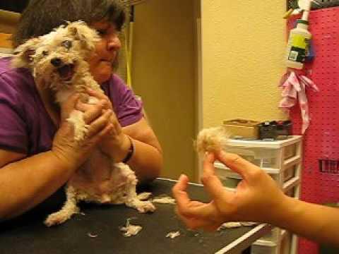 Senior Disabled Pet Groom Video 4
