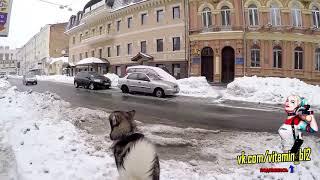 Неадекватный сосед угрожает парню / Конфликт из-за собаки / быдло