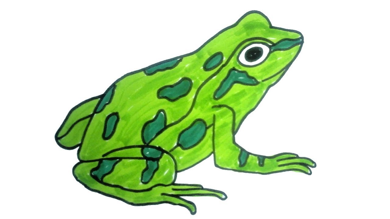 how to draw a frog | Easy Step by Step Drawing for kids | Children ...