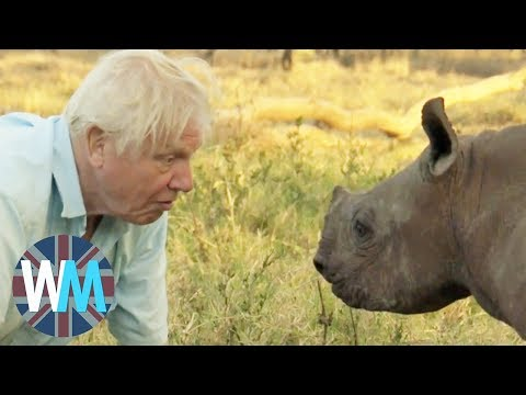 Top 10 David Attenborough Moments