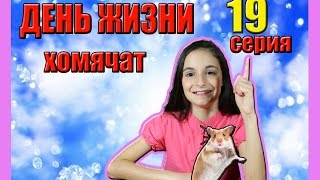 ХОМЯЧКИ | 19 ДЕНЬ ЖИЗНИ ХОМЯЧАТ | CHILD OF THE HAMSTER | Алиса Изи
