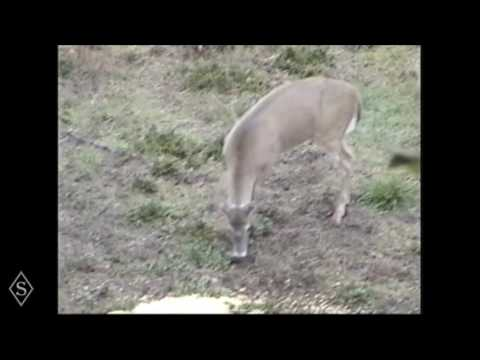 North American Bowhunting Journey