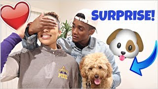 surprising-my-girlfriend-with-a-puppy-to-see-how-she-reacts