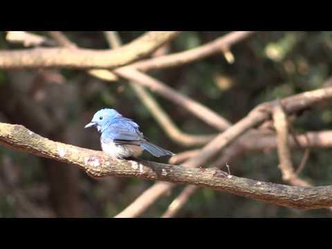 Birding in Thailand