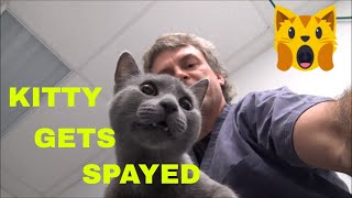 Kitty Cat Surgery: Spay and Neuter In The Veterinary Surgery