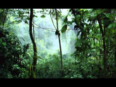 Rain Qkumba Zoo