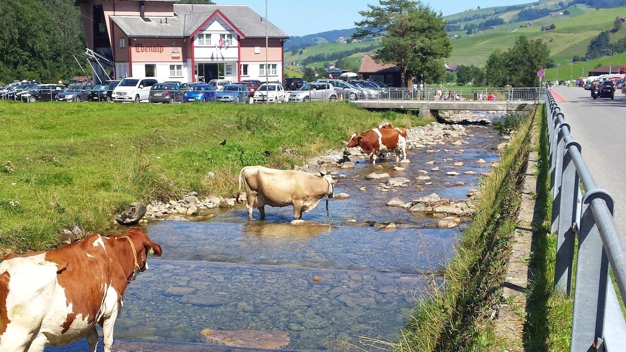 blogger.com – die Partnersuche für die Schweizer Landwirtschaft