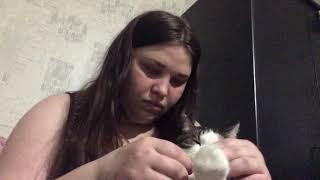 Обработка раны у кота