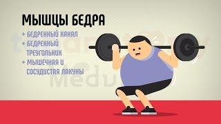 видео Анатомия и тренировка мышц бедра