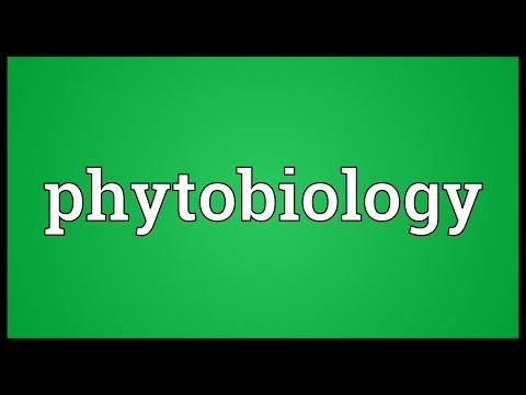 Header of phytobiology