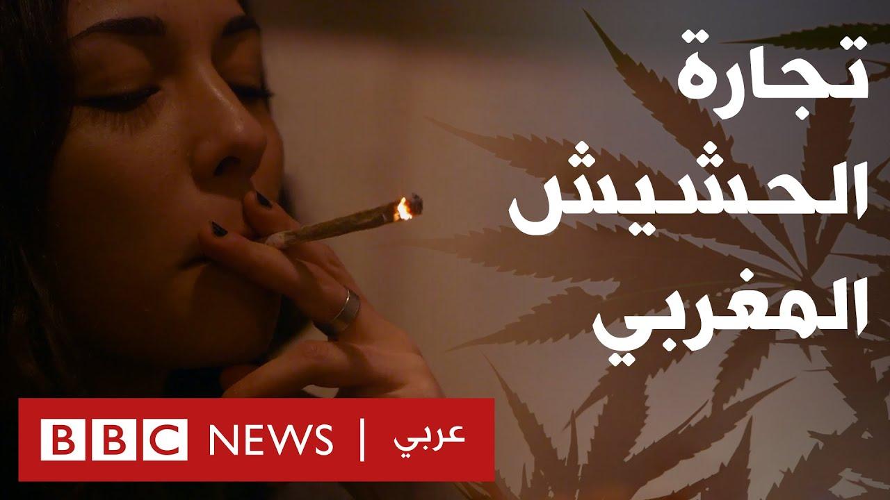 من يحقق الثراء من الحشيش المغربي؟