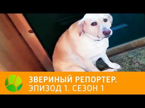 Порно Видео Онлайн Бесплатно - Русское Porno, Порно Фильмы