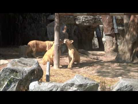 Zoo Safari World Chiang Mai Bangkok Thailand Travel Guide