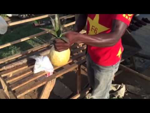 Pineapple cutting in Uganda