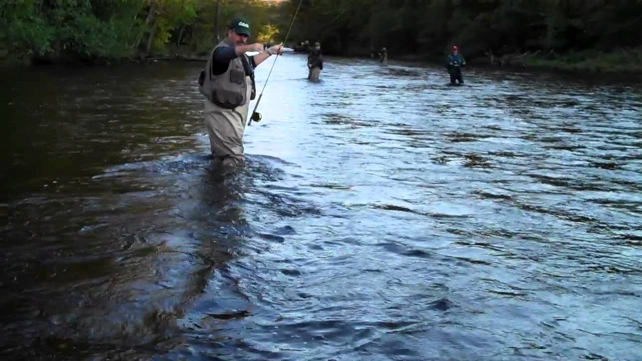 Salmon fishing pulaski ny mike sullivan upper ellis cove for Salmon fishing pulaski ny