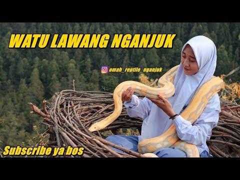 watu-lawang-nganjuk-sawahan-ngliman-with-omah-reptile-nganjuk-and-friends