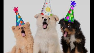 happy birthday funny - Dogs Song Happy Birthday