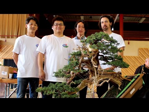 Bonsai demo by the Kimura disciples