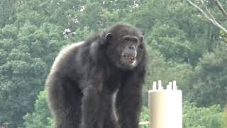 He is busy with monitoring, patrol and power showings 東山動物園の...