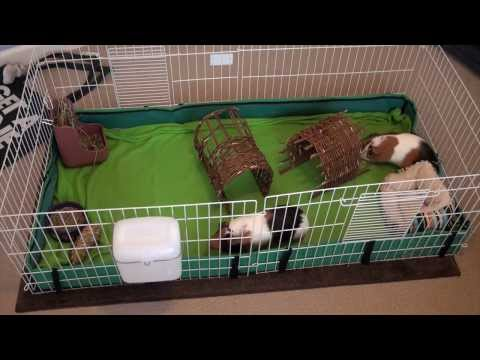 Midwest guinea pig cage unboxing and setup doovi for How to clean guinea pig cages