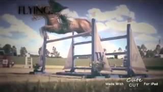 А мой смысл жизни,это конный спорт.