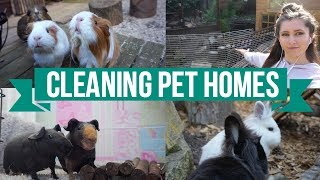 Cleaning The Pets Homes