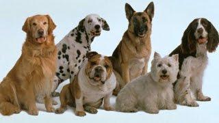Как уговорить родителей купить собаку?(ВК: https://m.vk.com/id261513582?m=152 Мой Instagram проект: http://instagram.com/their_work_to_wait Мой Life Instagram: http://instagram.com/norwchic ..., 2015-04-26T17:30:30.000Z)