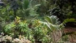 Hotel Kalibunan By: LATIGO (FT. PYTHON) - Bisaya Rap / Song