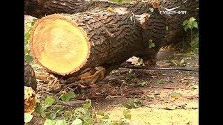Отключение света и поваленные деревья на Самарскую область обрушился ураган