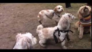 Small Dogs Meetup Group Hikes Forks Of The Credit Provincial Park