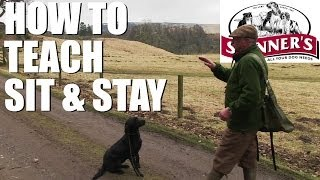 Gundog Training Tips - Sit And Stay