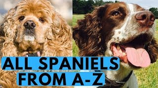 All Spaniel Dog Breeds List (from A to Z)