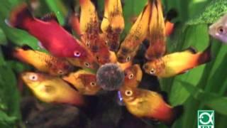 видео Корм для рыб JBL