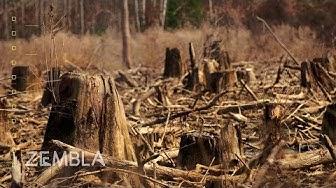 Leidt de vraag naar biomassa tot grootschalige kaalkap? (2017)
