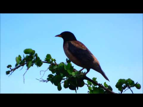 Kumana National Park, Sri Lanka: a journal