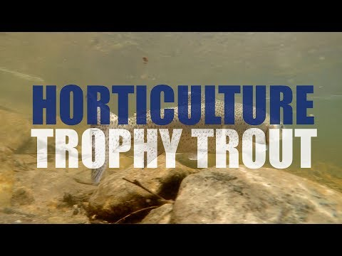 Horticulture: Stocking The Black River With Trophy Trout