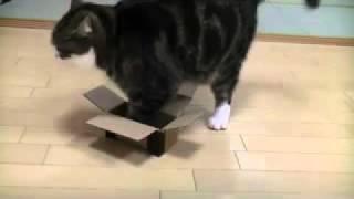 Кот Мару и коробки
