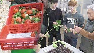 선진화 농법의 진수, 농업 마이스터 '딸기 수경재배' …
