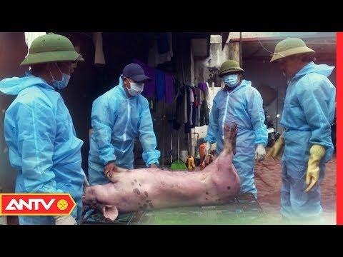 Khiếp sợ cận cảnh lò thu mua thịt lợn dịch bệnh, lợn chết ở Hưng Yên | An toàn sống | ANTV