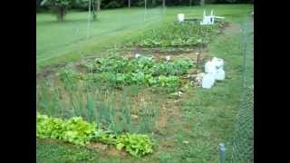 How I Built My Garden Rabbit fence with Inexpensive Poultry fence chicken wire.
