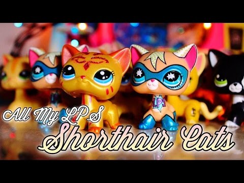 All My Lps Shorthair Cats Youtube
